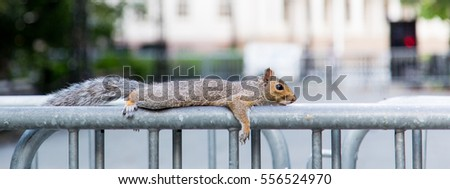 Squirrel resting on a metal fence