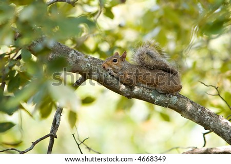 Squirrel resting on tree branch