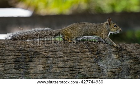 squirrel shows his long tail  sitting on a tree