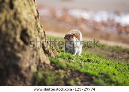 Squirrel sitting looking pretty - stock photo