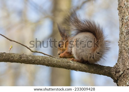 squirrel sitting on a tree branch in spring