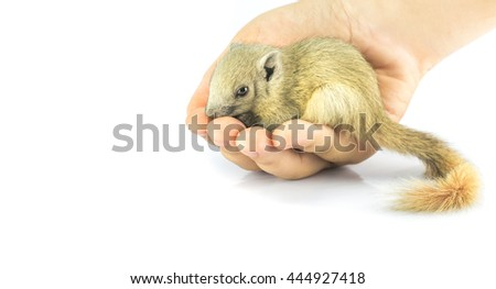 squirrel sleep in hand. object on isolate background.