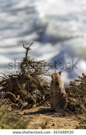 Squirrel standing at the beach