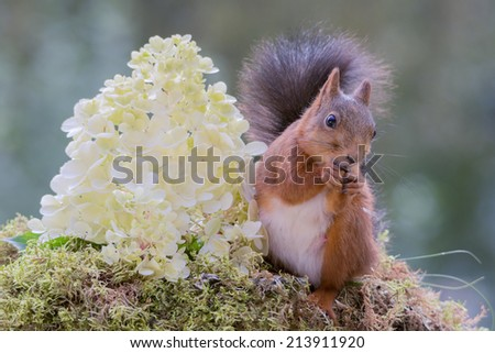 squirrel standing beside a white flower