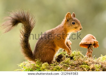 squirrel standing in moss with a mushroom