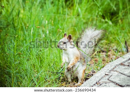 Squirrel standing in sun in the grass - stock photo
