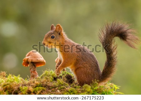 squirrel standing on moss with mushroom
