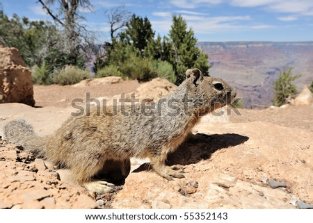 Squirrel, USA - stock photo