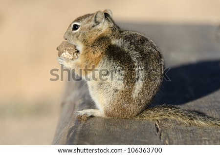 squirrel while eating on a bench in Bryce Canyon