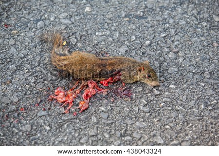 Squirrel with a small accident on the road.  - stock photo