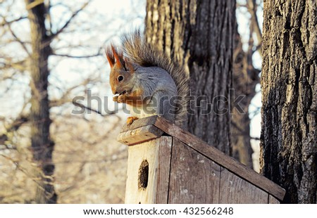 Squirrel with bushy tail gnaws nuts sitting on the roof of the birdhouse - stock photo