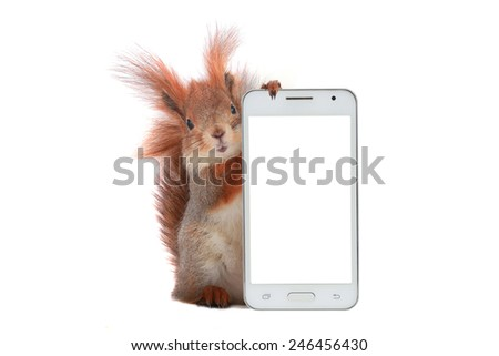 squirrel with  mobile phone on a white background with white screen - stock photo