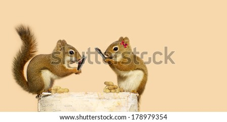 Squirrels playing cards for peanuts. Part of a fun series.  - stock photo