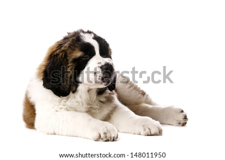 St Bernard puppy laid with his eyes closed isolated on a white background - stock photo