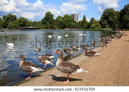 St James's Park in London's Westminster, England a landscape showing its lake with geese standing at the water edge in the foreground and with a clear blue sky - stock photo