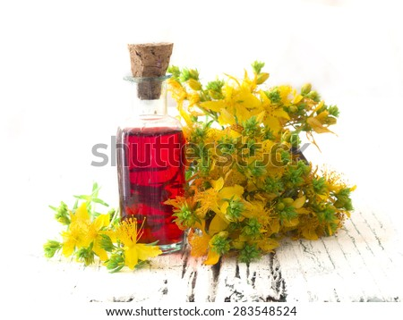 St John's wort, healing plant - stock photo