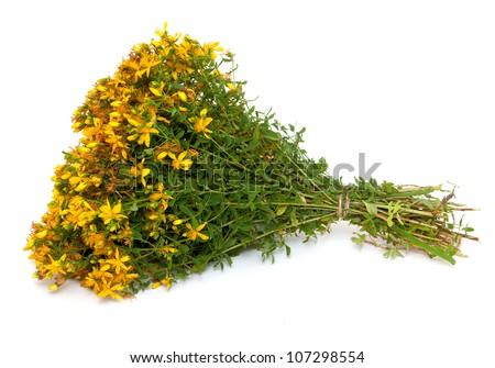 St. John's wort (Hypericum perforatum,tutsan) flowers over white - stock photo