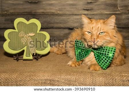 St. Patrick Day Cat - stock photo