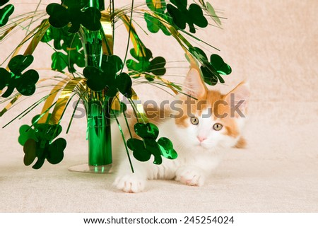 St Patrick Day Maine Coon kitten with four leaf clover ornament on beige background  - stock photo