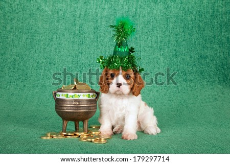 St Patrick's day theme Cavalier King Charles Spaniel puppy with shamrock hat with gold pot filled with fake gold coins on green background