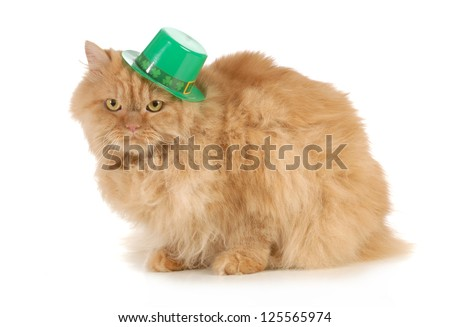St Patricks Day cat looking at viewer isolated on white background - stock photo