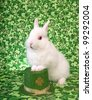 St Patricks Day white Netherland Dwarf Bunny Rabbit on green clover background with Irish hat - stock photo