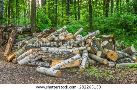 stack of birch wood trunks stored in a forest - stock photo