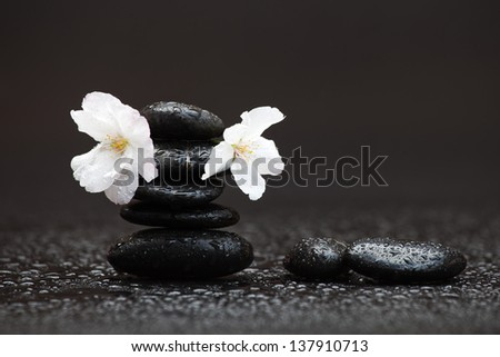 stack of black stones on a wet black background with two cherry blossoms