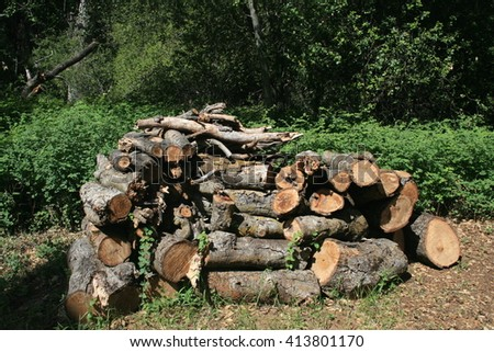 Stack of cut logs in a forest, California - stock photo