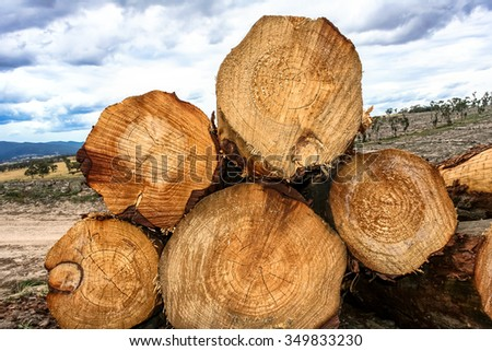 Stack of cut pine logs in forestry with detailed grain patterns and growth rings shown in cross section with deforestation of forest paddocks in distance. - stock photo