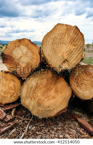 Stack of cut pine logs in forestry with detailed grain patterns and growth rings shown in cross section with deforest paddock in distance. - stock photo