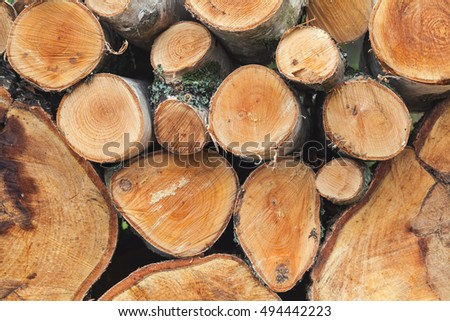 Stack of firewood, round birch chunks, close up photo