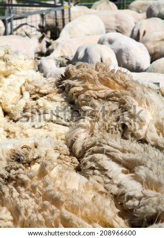 Stack of fresh shaven wool vertical - stock photo