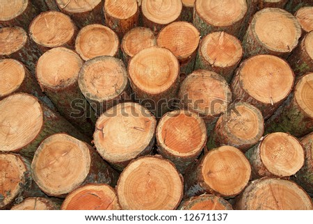 Stack of freshly cut softwood timber - stock photo