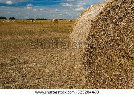 Stack of hay on the field, Belarus, Summer