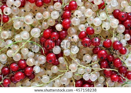 stack of mixed red and white currant - stock photo