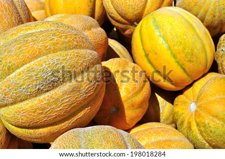 stack of ripe organic  melons after harvesting - stock photo