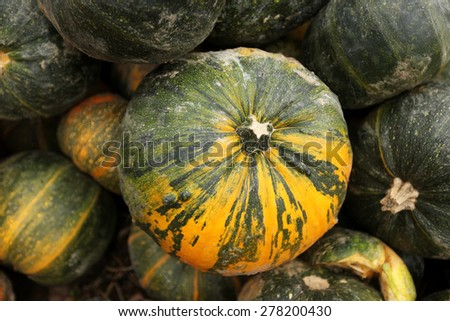 stack of ripe pumpkins in the farm - stock photo