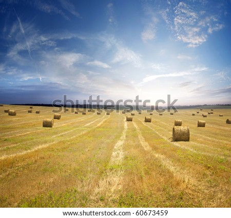 stack of straw on the mown field beneath a blue sky, Tuscany