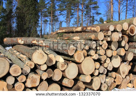 Stack of wooden logs with coniferous forest and blue sky background. - stock photo