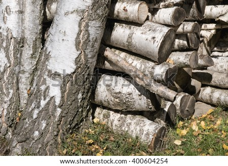 stacked chopped logs