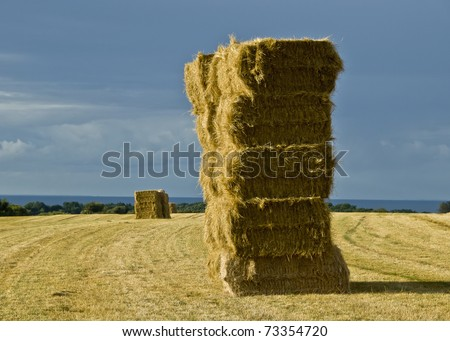 Stacked straw hay bails in field - stock photo