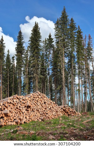 stacked timber on the edge of a forestry clearcut - stock photo