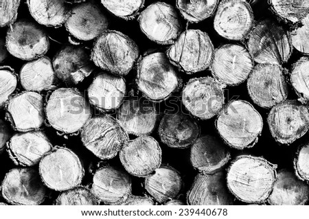 Stacked up on top of each other in a pile of eucalyptus wood for background.Black and white photo. - stock photo