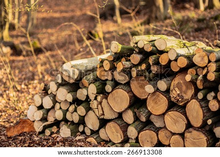 Stacked wood in a forest in Franconia, Germany. Early Spring barren forrest. Lovely warm and brownish colors. Evening Sun - stock photo