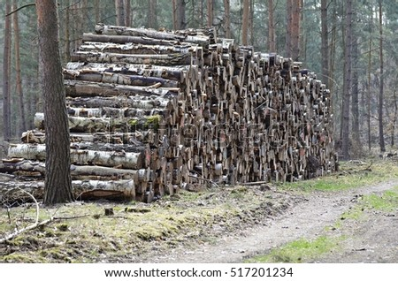 stacked wood in the forest,