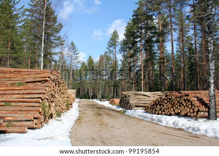 Stacks of logs along forest logging road on clear day of spring. - stock photo