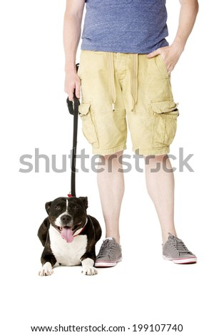 Staffordshire Bull Terrier on lead laying down next to owner - stock photo