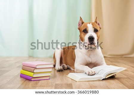 Staffordshire terrier dog with books