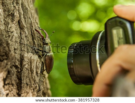 Stag-beetle on bark of a tree and a hand of the person who photographs him - stock photo